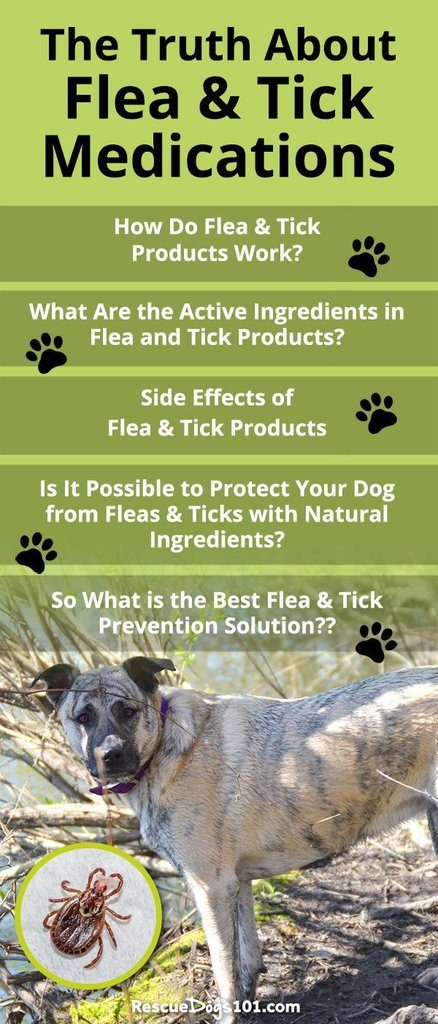 WARNING! The Truth About Flea and Tick Medications