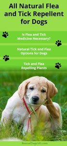 Holistic All Natural Flea and Tick Prevention