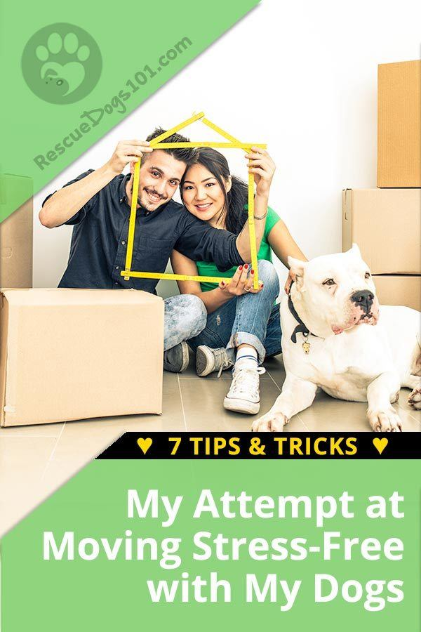 Moving with Dogs - 7 Tips & Tricks: My Attempt at Moving Stress-Free with My Dogs -  I've put together this list of our experiences of moving with our dogs, I hope this helps your next move go smoothly and as stress-free as possible… for you and your dog. #movingtips #moving #petsafe #doggies #doglovers #dog #dogcare #doghealthtips #doghealth #doghealthwellness #dogstuff #cuteanimals #puppy #puppylove #doggoals #rescuedogs101