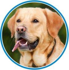 How To Speak Dog Language Chart - Calm Dog
