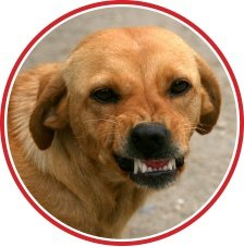How To Speak Dog Language Chart - Aggressive Dog