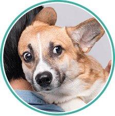 How To Speak Dog Language Chart - Scared Dog