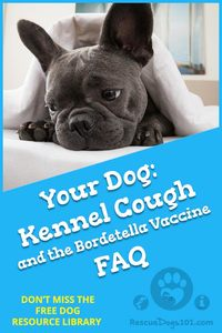 Kennel Cough FAQ and the Bordetella Vaccine
