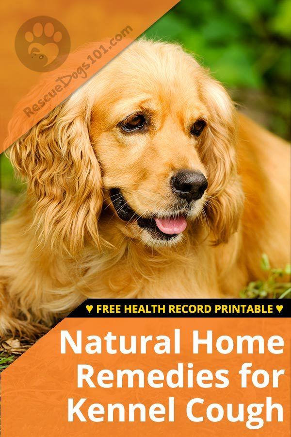 Natural Home Remedies for Kennel Cough - 5 easy, natural kennel cough home remedies and prevention techniques. The first 3 are already in my routine to give to our dogs as they have so many other benefits... #kennelcough #homeremedy #homeremedies #doghealth #dog #petsafe #doglovers  #dogcare #doghealthtips #doghealthwellness #dogstuff #puppy #rescuedogs101