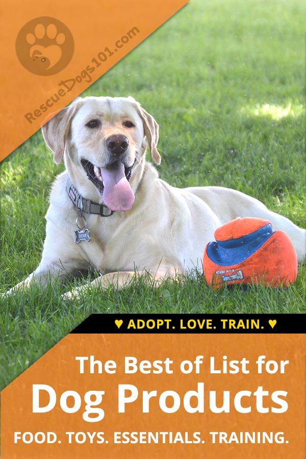 The best dog products of 2018