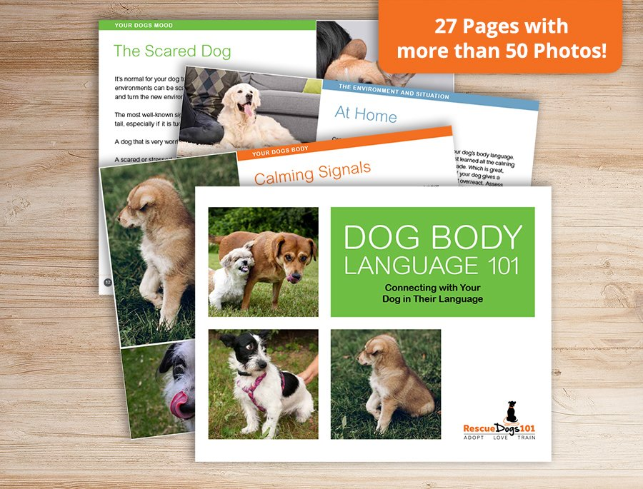 Dog Body Language 101 Book Cover