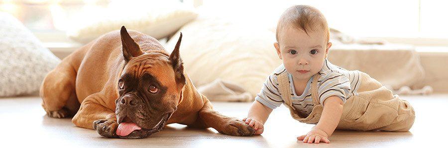 Family Dogs that Bite Kids