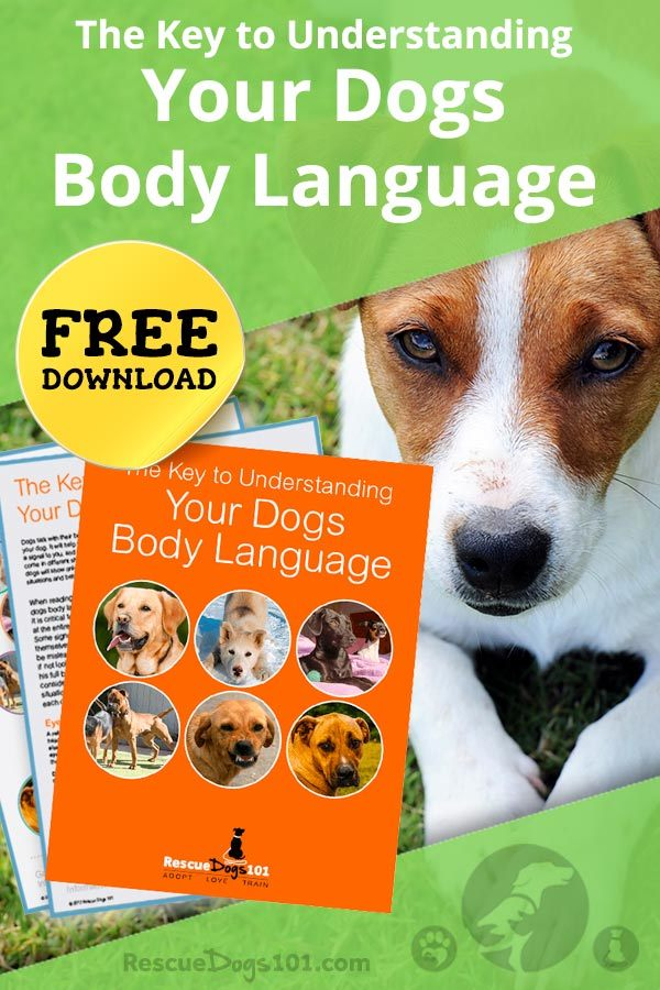 The Key to Understanding Your Dogs Body Language Cheat Sheet