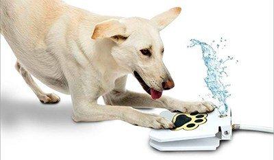 dog water game