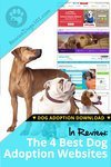 The 4 Best Adoption Websites for Dogs