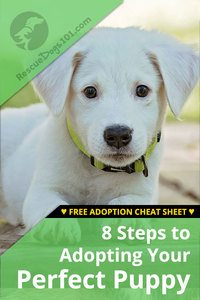 8 steps to adopting your perfect dog or puppy