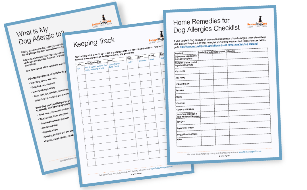 Dog Allergy Detective Form and Checklist