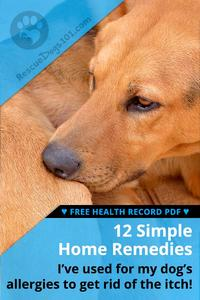 The Ultimate Guide to Home Remedies for Dog Allergies
