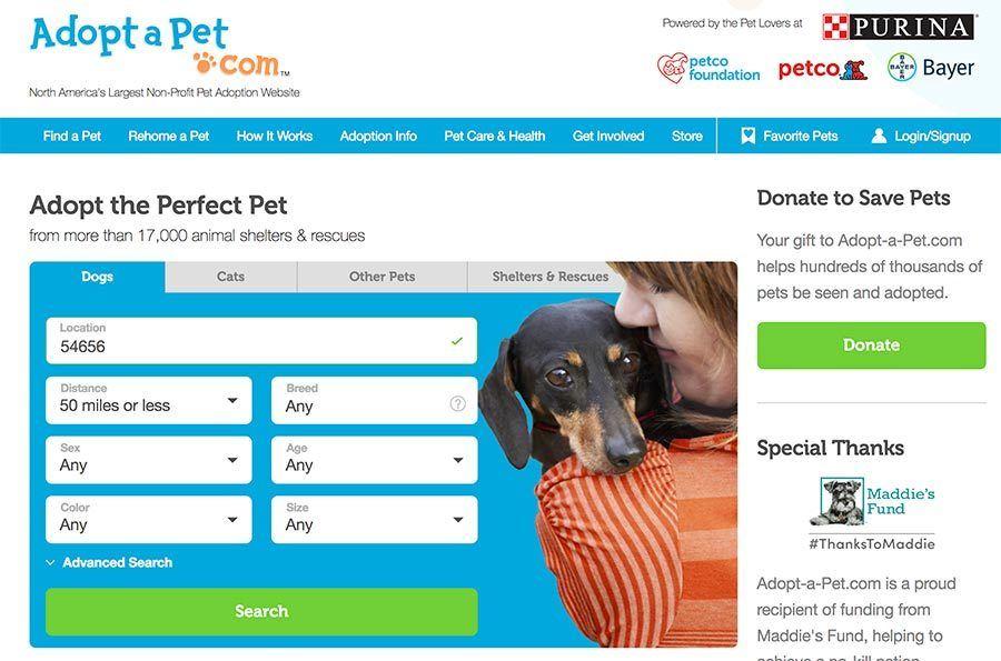 screen shot of dog adoption website adoptapet