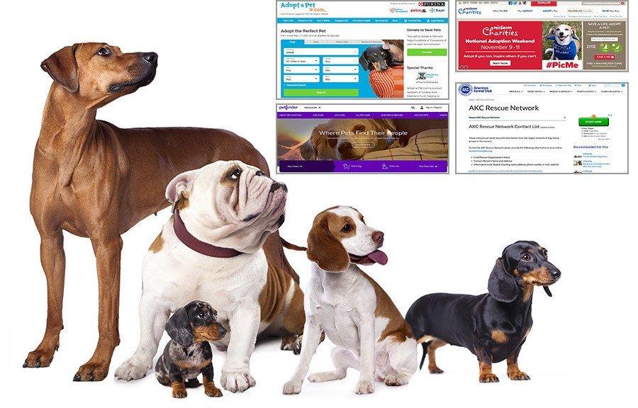 top 4 dog adoption websites