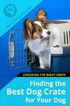 Finding the Best Dog Crate
