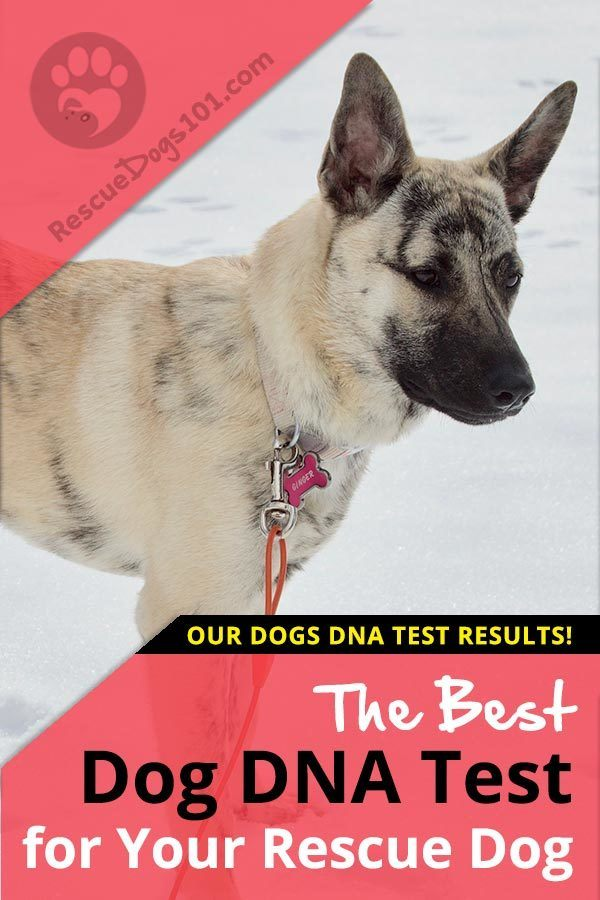 The best Dog DNA Test for your rescue dog