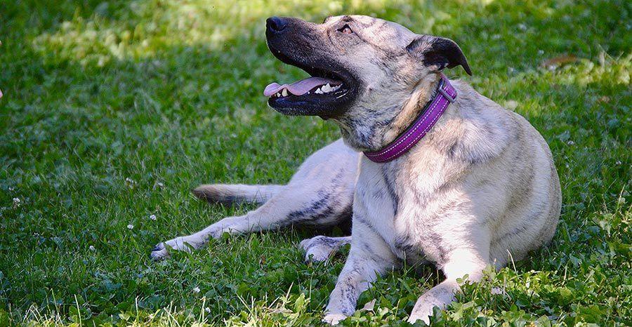 Rescue Dog Ginger DNA Test