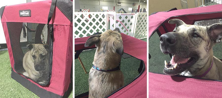 best soft crate for dog agility