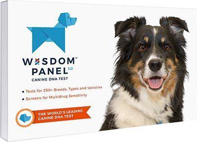 Wisdom Dog DNA Test