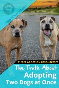 Truth about Adopting Two Dogs at Once