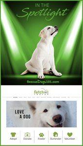 Dog Rescue in the Spotlight - Fetch WI Rescue