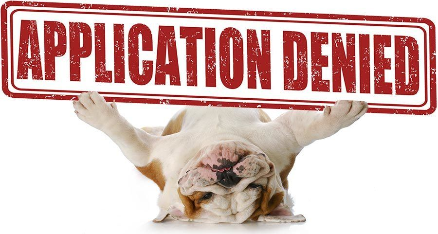 Adopting a Dog Process application denied