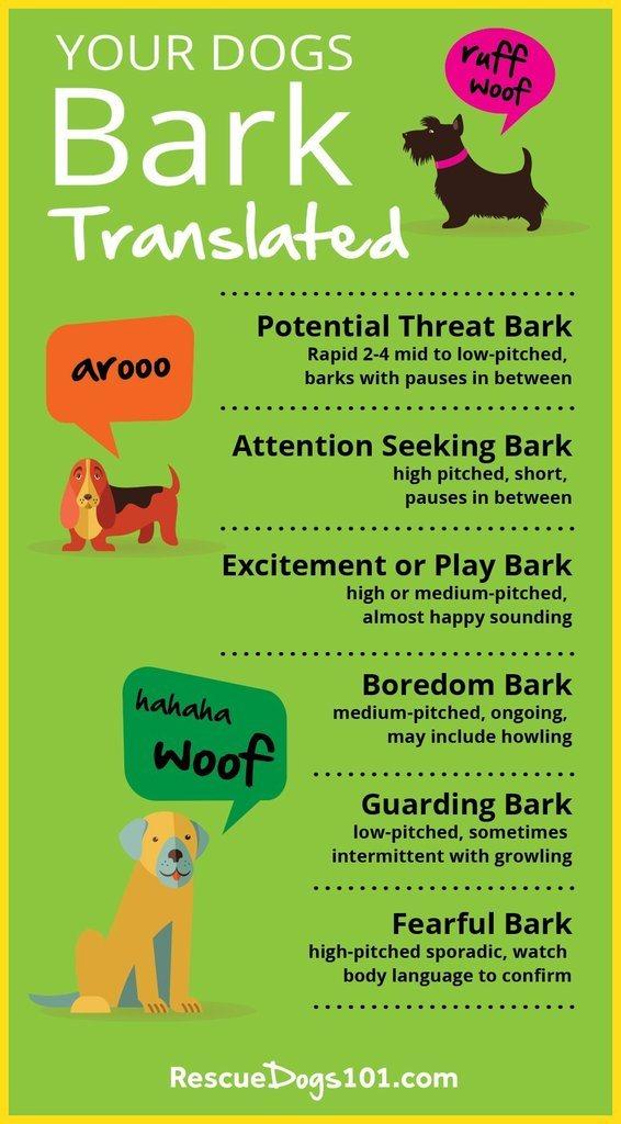 Types of Dog Barks Translated