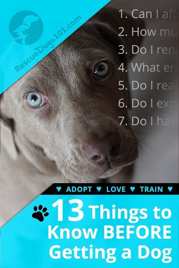 13 Things to Know Before Getting a Dog