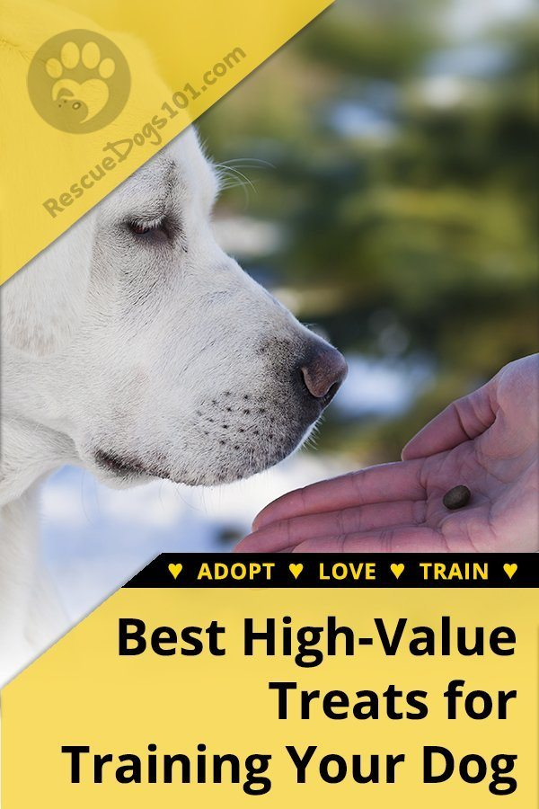 Best Healthy Dog Treats for Training #dogtreats #dogs #puppy #dogsandpuppies #dogtraining #rescuedogs101