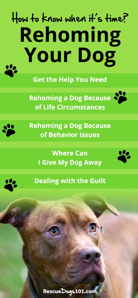 Rehoming a Dog Tips