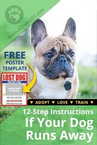 My Dog Ran Away! 12-step instructions to do if your dog takes off.