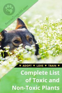 Complete List of Toxic Plants and Non-Toxic Plants to Dogs