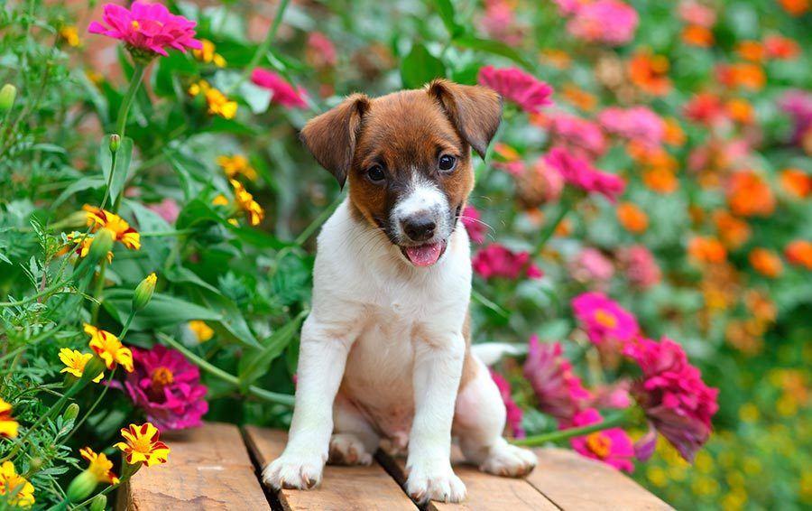 puppy sitting in colorful garden