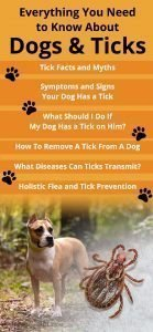 Everything You Need to Know about Dogs and Ticks