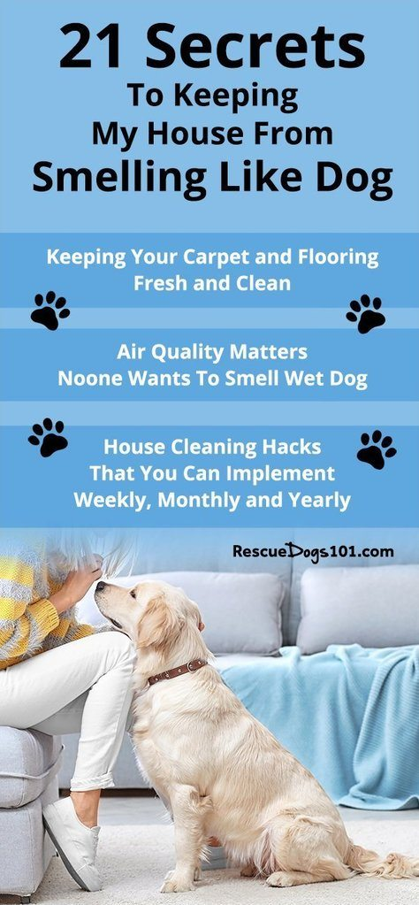 21 Easy Ideas to Keep Your House From Smelling Like Dog