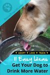 11 Easy ideas get your dog to drink more water
