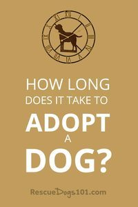 How Long Does It Take To Adopt A Dog?