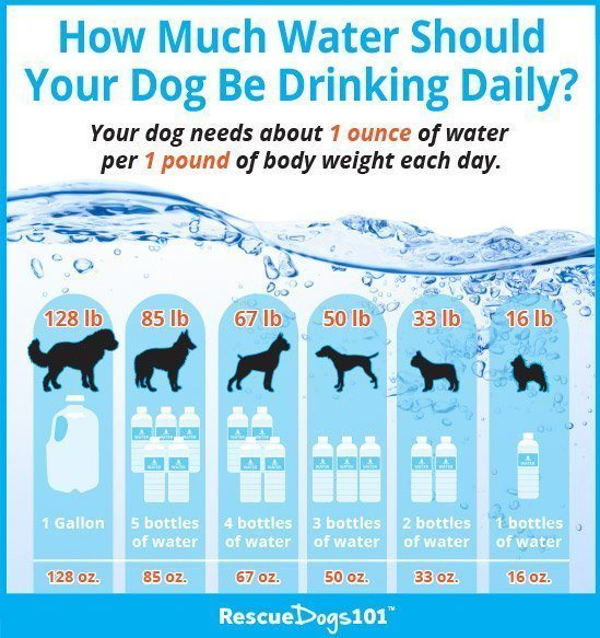 How Much Water Should Your Dog Be Drinking Infographic