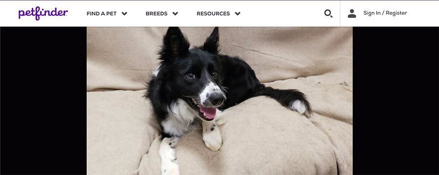Rocky's Petfinder Profile Picture