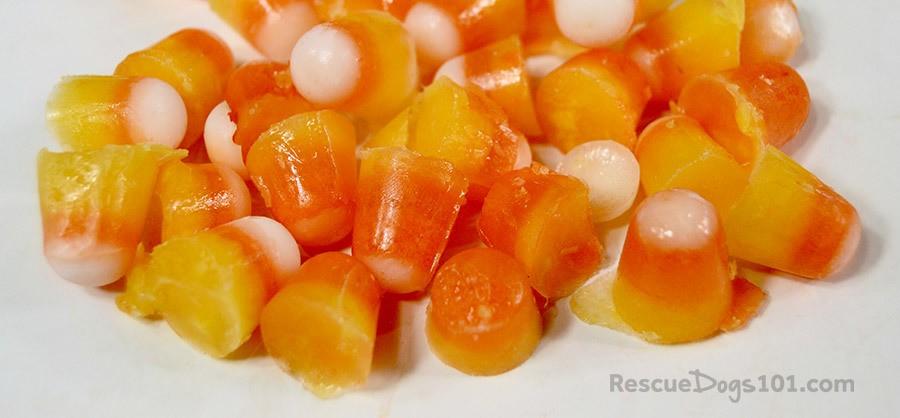 Homemade Halloween Candy Corn Frozen Dog Treats