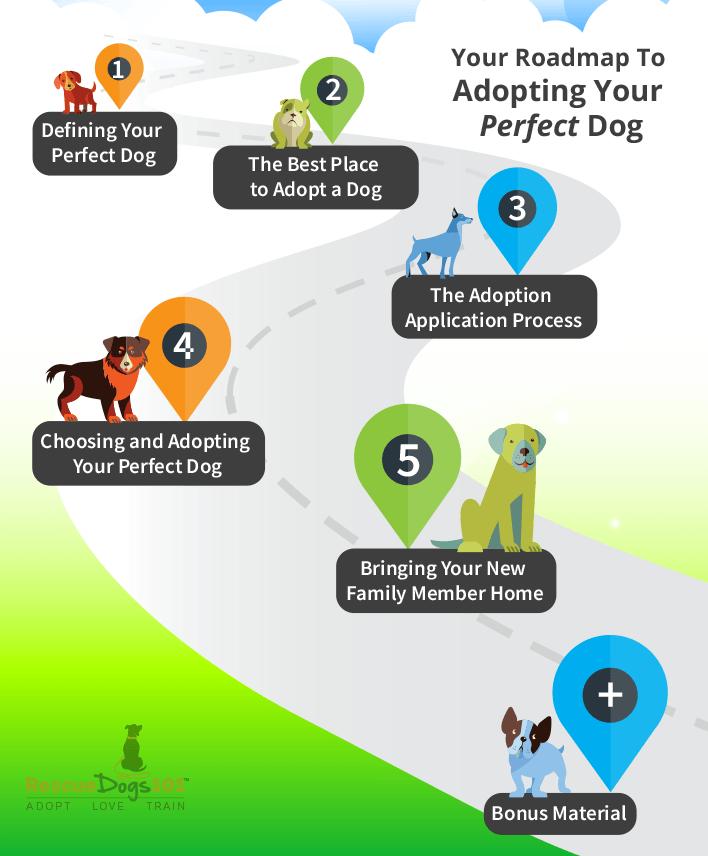 Adopting Your Perfect Dog 101 Roadmap