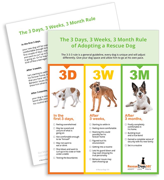 The 3 Days, 3 Weeks, 3 Month Rule  of Adopting a Rescue Dog