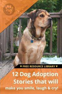 Barron the dog adoption story