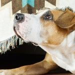Adopting a fearful dog and how to help