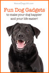 Fun dog gadgets to make your dog happier and your life easier!