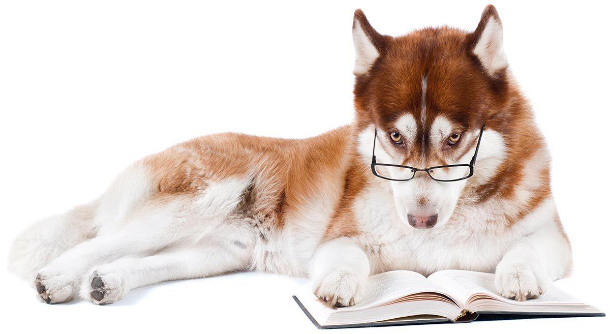 dog reading best dog training books