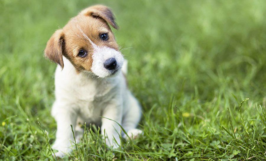 cute puppy titling head