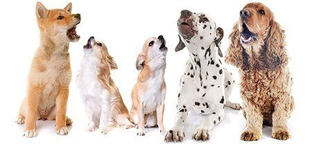 group of dogs barking