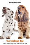 two barking dogs - the barking dog. learn how to stop your dog from barking
